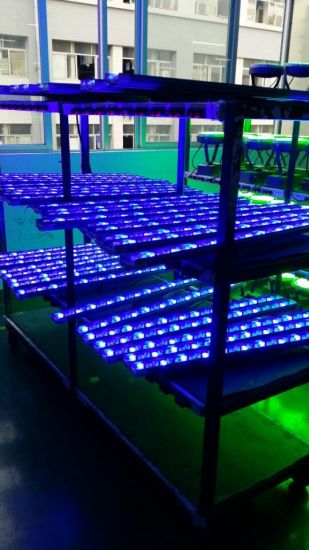 Muti-Color LED Bridge Lighting LED Wall Washer Light